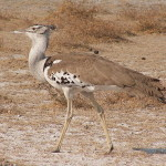 Inilah 5 Burung Tebesar di Dunia Wajib Diketahui