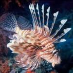 4 Jenis Ikan Hias Termahal di Dunia