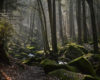 black-forest-landscape