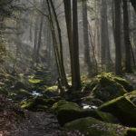 Inilah 7 Hutan Paling Misterius Di Dunia