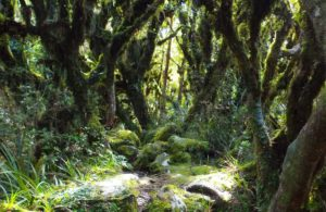 goblinforest