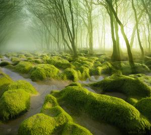 moss swamp