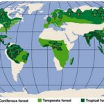 10 Negara yang Memiliki Hutan Terbesar di Dunia