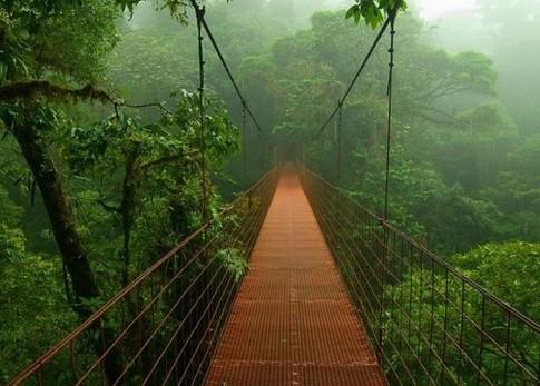 Hutan Amazon di Brazil