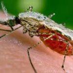 6 Penyakit Sepele yang Mematikan Wajib Diketahui