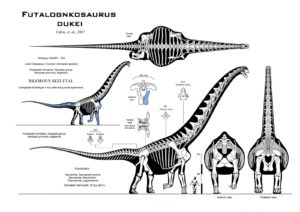 futalognkosaurus_recon_mk__viii_by_paleo_king-d5m5zf4