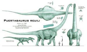 puertasaurus_reuili___revised_by_paleo_king-d3lfqci