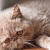 Cara Ampuh Mengobati Kucing Jamuran dengan Cepat